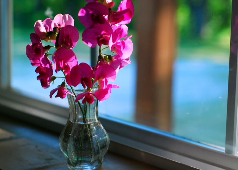 sweet peas in the window